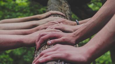 Plusieurs mains sur un tronc d'arbre
