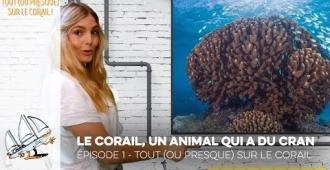 Tout (ou presque) sur le corail - Episode 1 - Le corail, un animal qui a du cran !