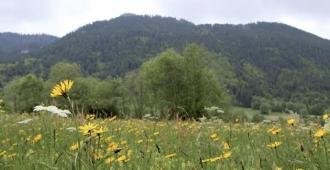 Nature = Futur ! Biomimétisme, le vivant comme modèle