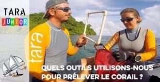 [Tara Junior] Quels outils utilisons-nous pour prélever le corail ?