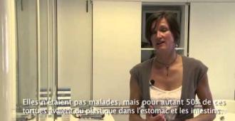 Tortues marines et plastiques - Tara Méditerranée 2014