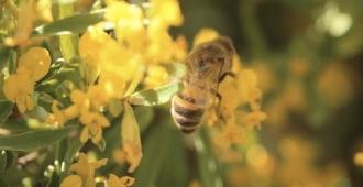 Nature = Futur ! L'energie des abeilles